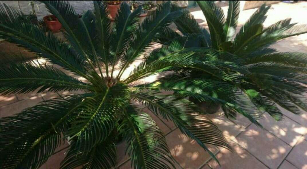 Imagen palmeras