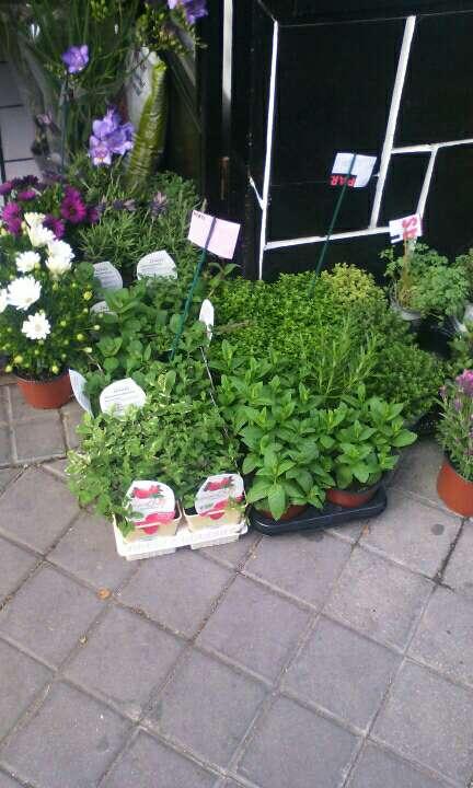 Imagen plantas aromaticas