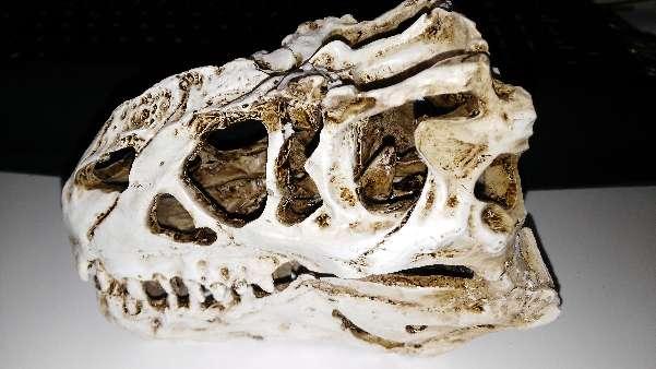 Imagen Cráneo de Dinosaurio resina