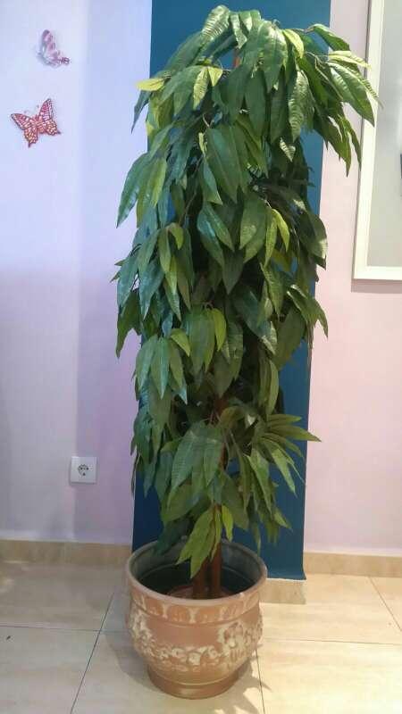 Planta artificial en xeraco valencia wendoo for Muebles de segunda mano valencia particulares