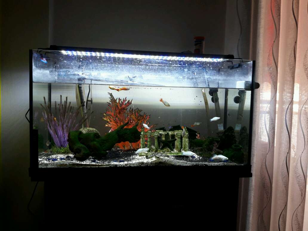 Imagen aquari 120 litros