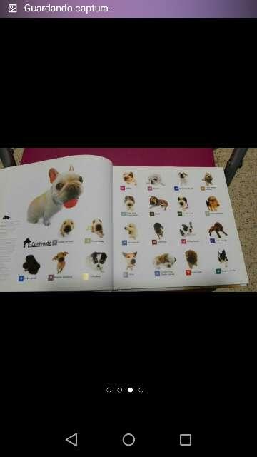 Imagen producto Libro de perros 2