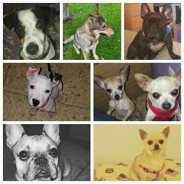 Imagen producto Guardería canina violeta  4