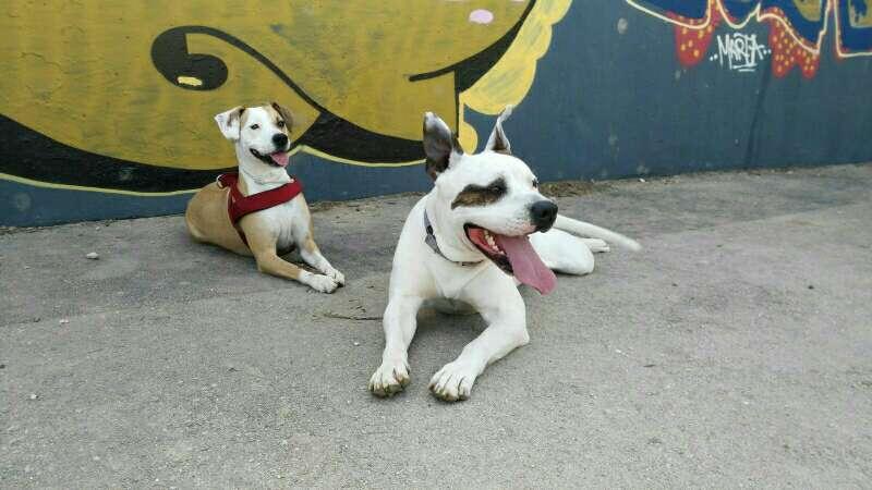 Imagen cuidador de perros y mascostas