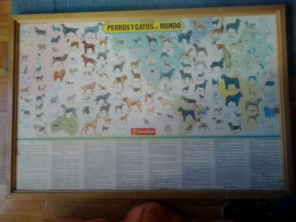 Imagen Cuadro Perros y gatos del Mundo