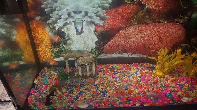 Imagen acuario completo de 100 litros
