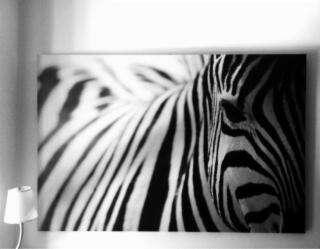 Imagen cuadro zebra Ikea