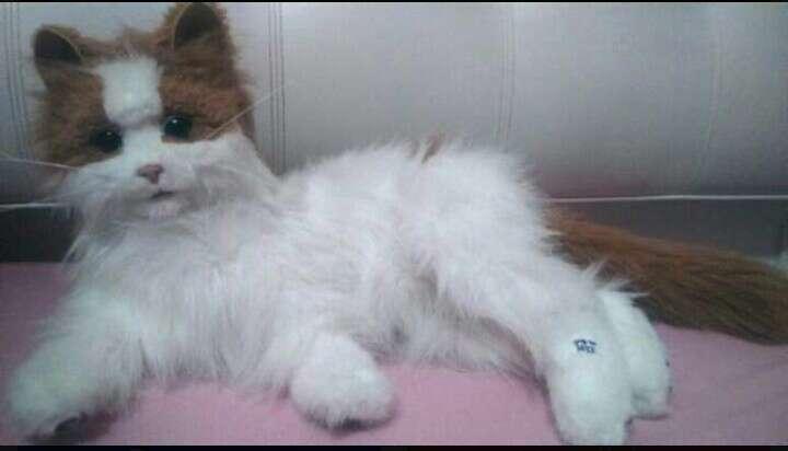 Imagen Gato de juguete