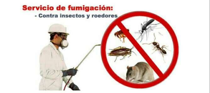 Imagen fumigacion 100% efectiva