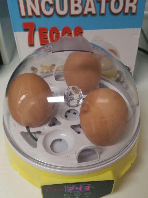 Imagen producto Incubadora pollos, reptiles, etc... 2