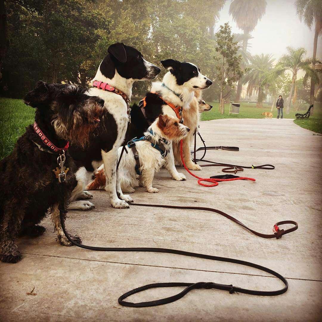 Imagen me ofrezco paseadora de perros