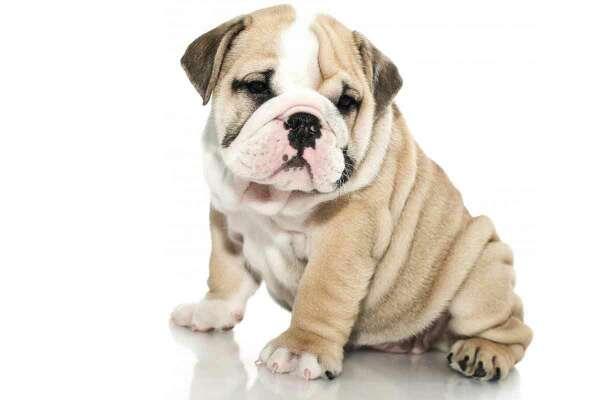 Imagen me ofrezco a cuidar perros