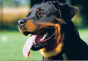 Imagen adiestrador y paseador de perros