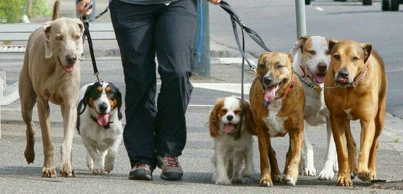 Imagen paseador de perros