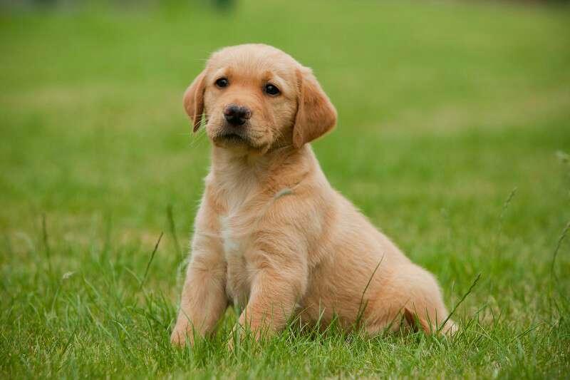 Imagen Paseo perros