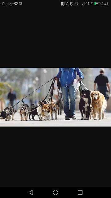 Imagen Cuidar y pasear perros