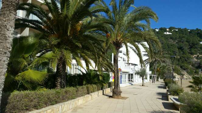 Imagen producto Ibiza alquilo atico 1 l.d