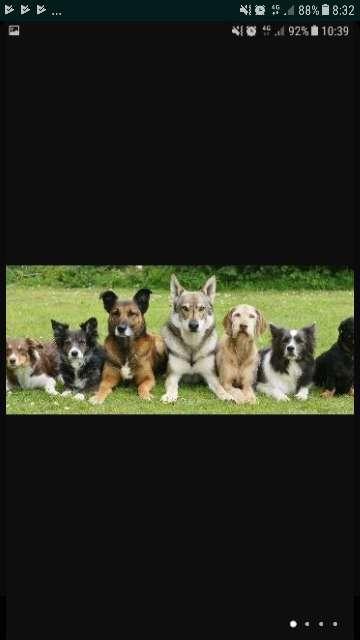 Imagen Adiestrador canino titulado