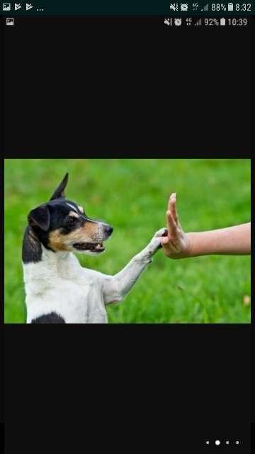 Imagen producto Adiestrador canino titulado 2