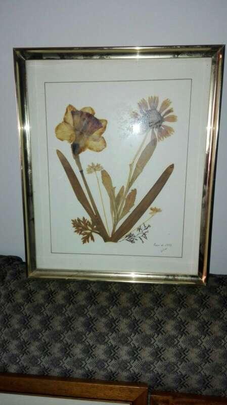 Imagen Cuadros de Patos y Flores disecadas