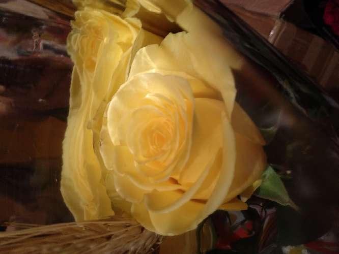 Imagen producto Rosa de sant Jordi 2