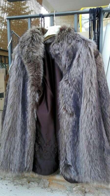 Imagen marmota de canada