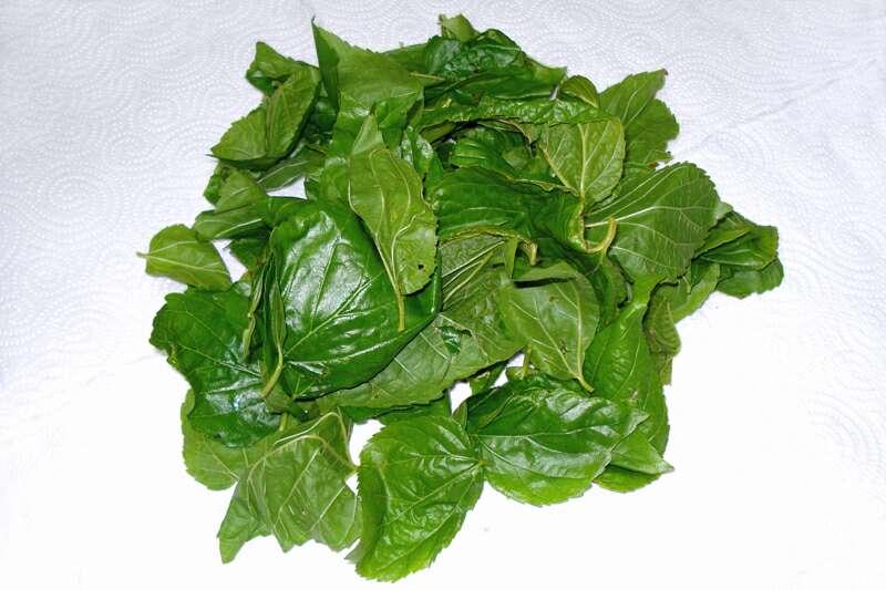 Imagen Bolsa con 80 grs de hojas de morera Morus Alba
