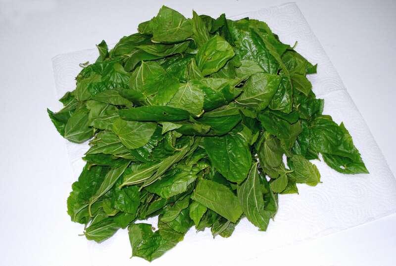 Imagen Bolsa con 450 grs de hojas de morera Morus Alba