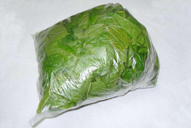 Imagen producto Bolsa con 450 grs de hojas de morera Morus Alba 4