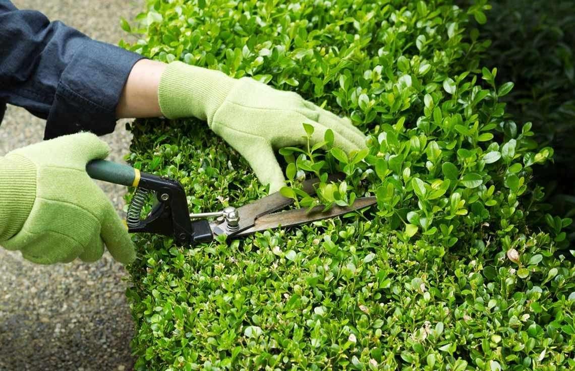 Imagen Servicio integral de jardinería