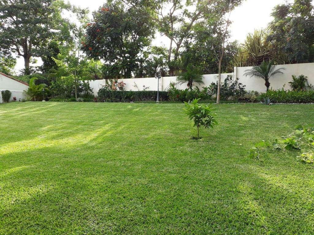 Imagen producto Servicio integral de jardinería 3