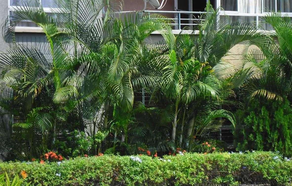 Imagen producto Servicio integral de jardinería 2
