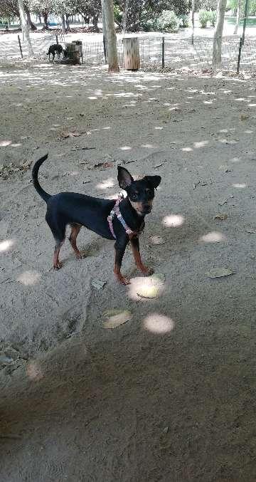 Imagen Paseadora de perros