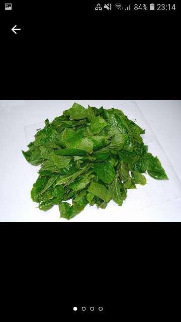 Imagen hojas de morera
