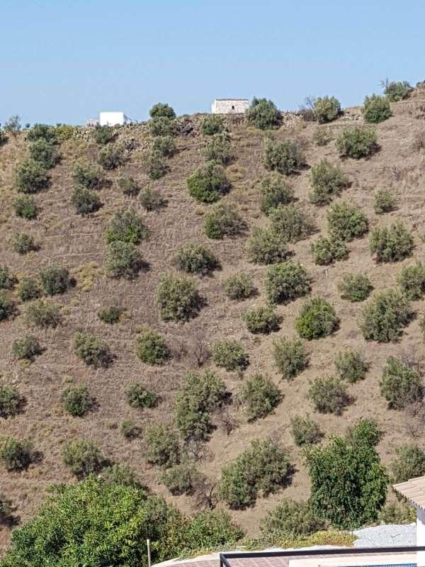 Imagen Terreno  para sembrar mangos o aguacate