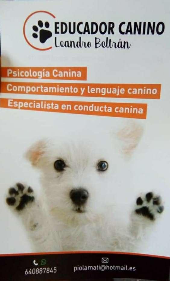 Imagen educador canino, adiestrador y residencia