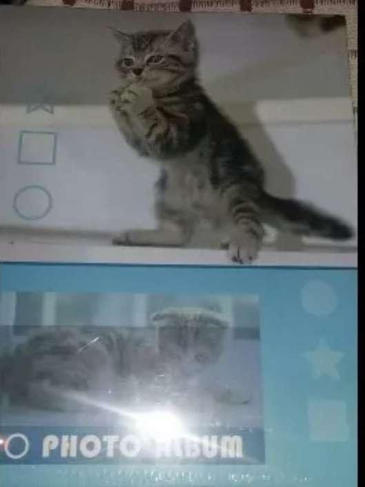 Imagen cuidado a gatos anti crisis  ( leer el anuncio )
