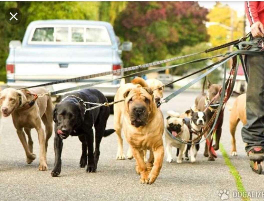 Imagen  paseo perro y cuido en casa ( leer el anuncio)