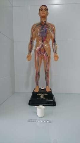 Imagen producto Juguete (Sistema Circulatorio)  8