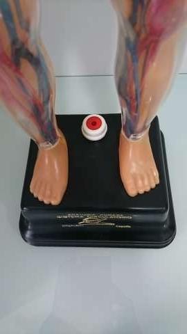 Imagen producto Juguete (Sistema Circulatorio)  6