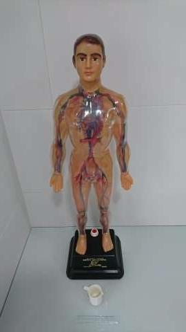 Imagen Juguete (Sistema Circulatorio)