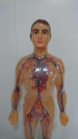 Imagen producto Juguete (Sistema Circulatorio)  4