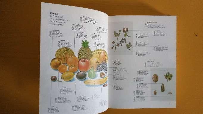 Imagen producto Diccionario Multilingue. 3