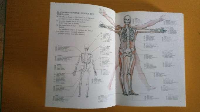Imagen producto Diccionario Multilingue. 5