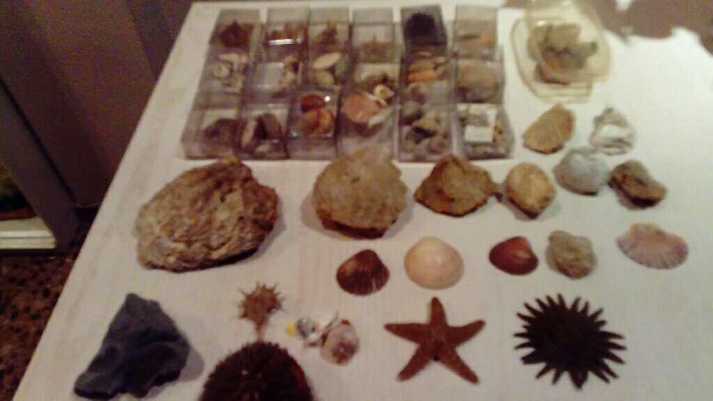 Imagen Fósiles marinos