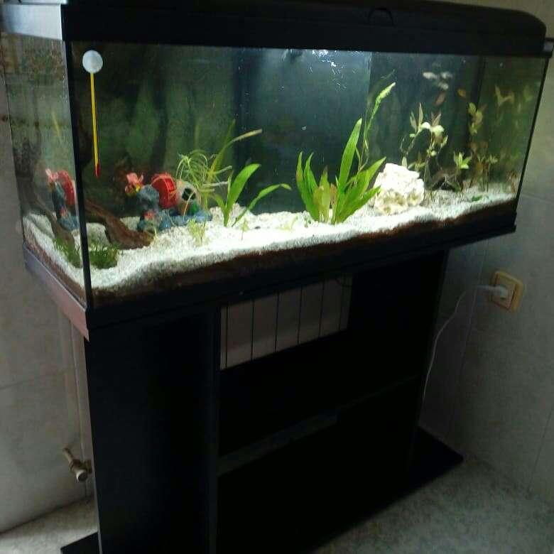 Imagen producto Acuario 120 litros 2