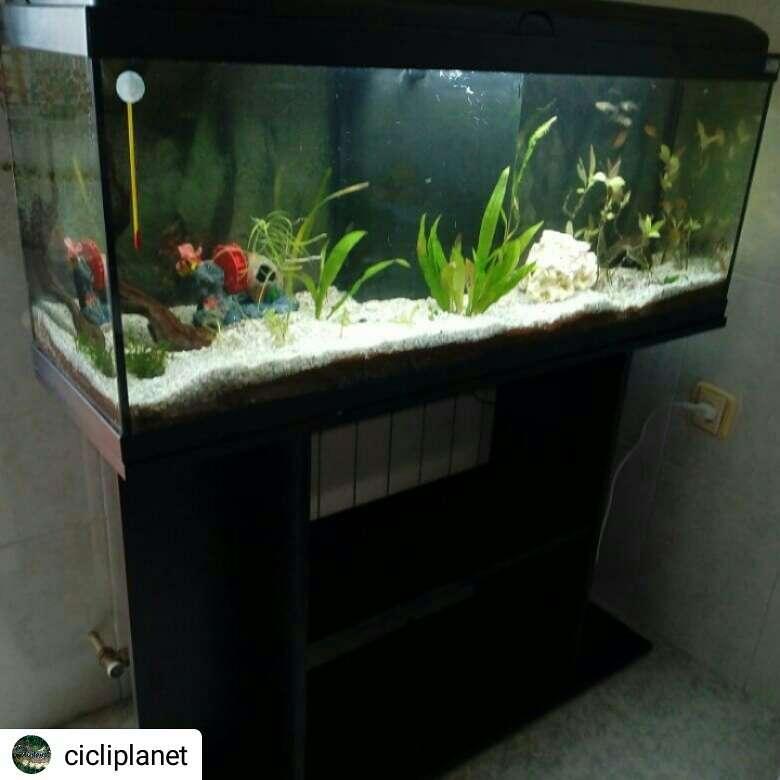 Imagen acuario 120 litros