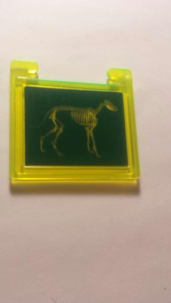 Imagen producto Radiografía playmobil  6