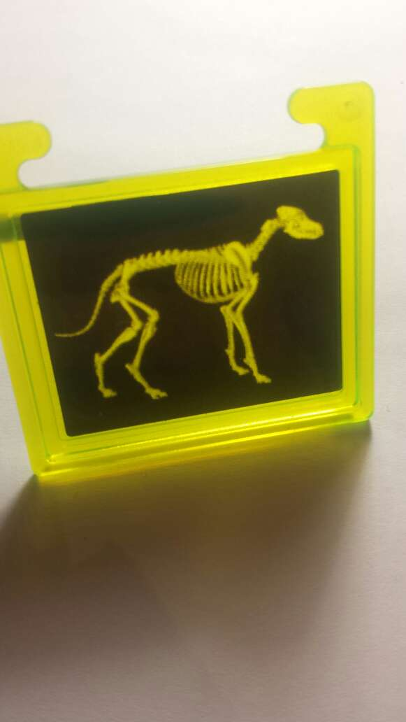 Imagen producto Radiografía playmobil  5