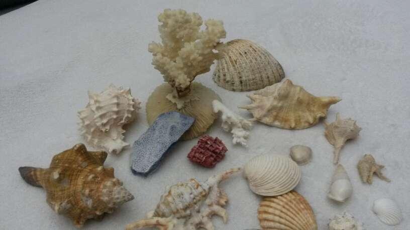 Imagen Lote surtido de conchas y caracolas de mar